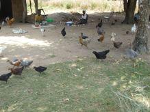 Ocaapa Group